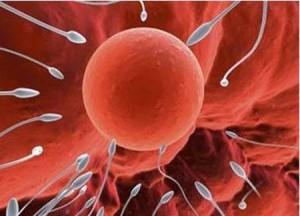 Tinh trùng gặp trứng để thụ thai