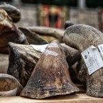 Sừng tê giác, sự thật về tác dụng của sừng tê giác