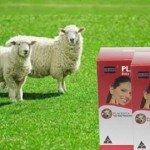 Nhau thai cừu giúp tái tạo da